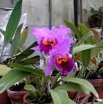 орхидея картинки каталог.