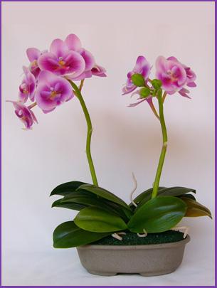 Размножение орхидей в картинках