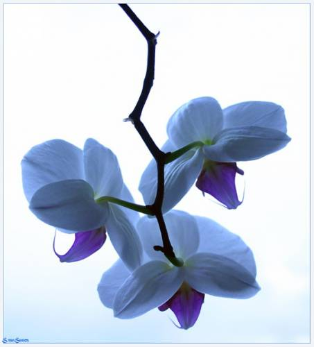 Редкие орхидеи
