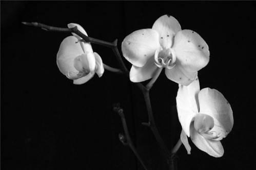 Комнатная орхидея уход