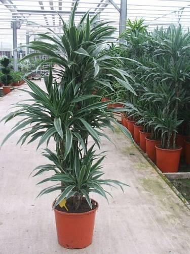 Комнатные растения мини на комнатных