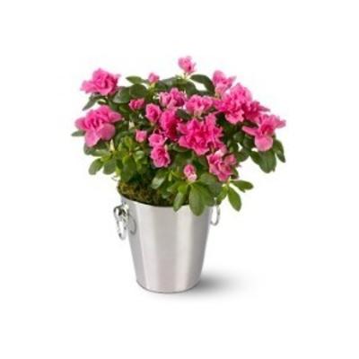 заказать букет цветов семейной паре срочная доставка миргород. скидки...