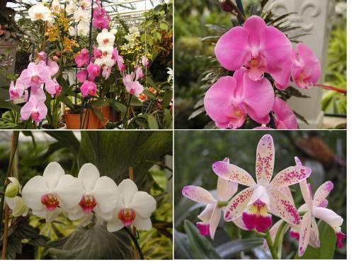 Орхидеи секреты выращивания орхидей