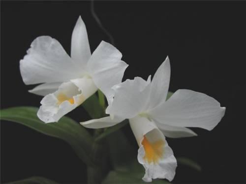 Стеклянный горшок для орхидеи купить - 8fed